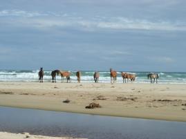 Horse rides on the beach are a good option