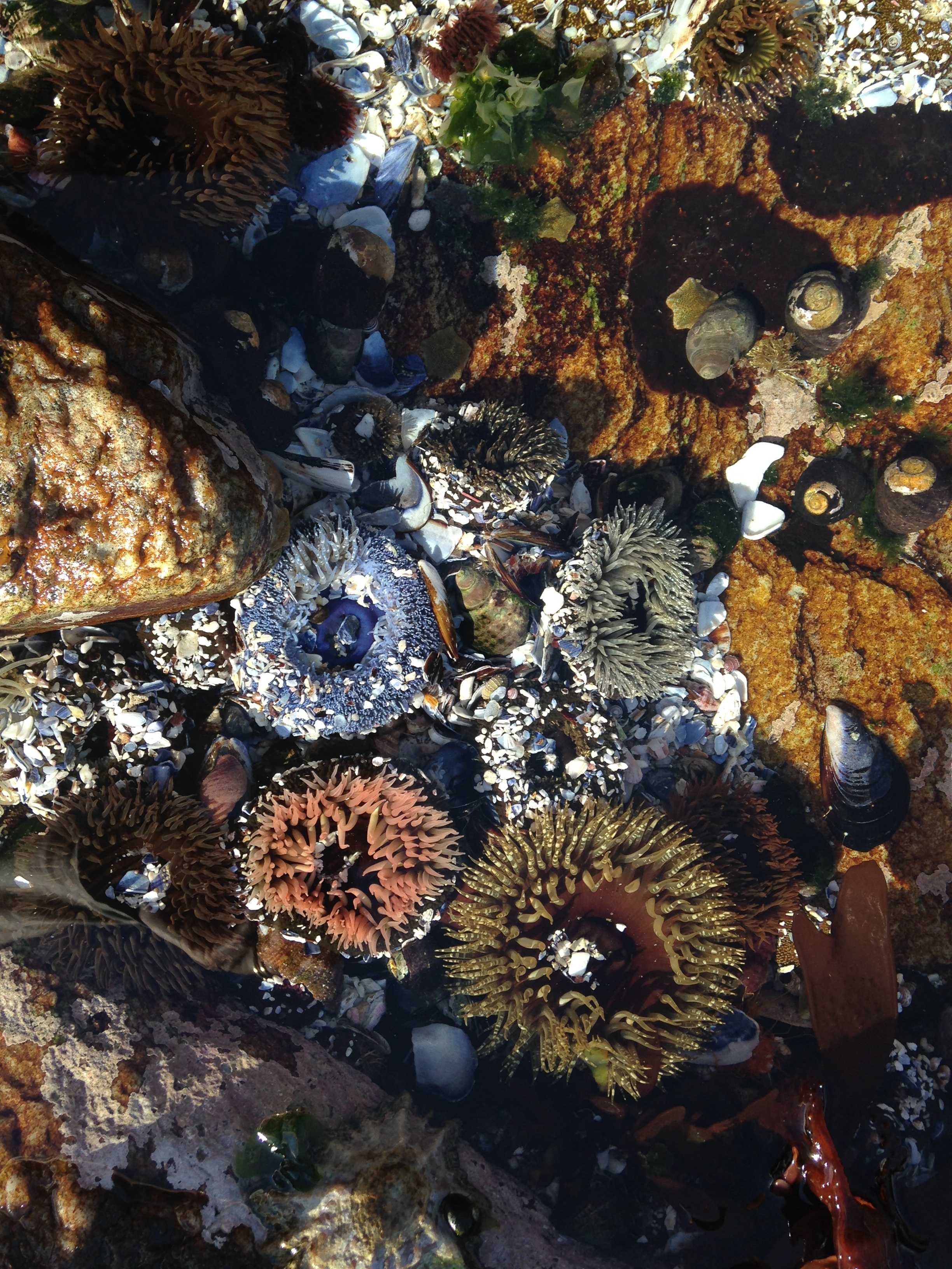 ps-sealife-in-the-rock-pool