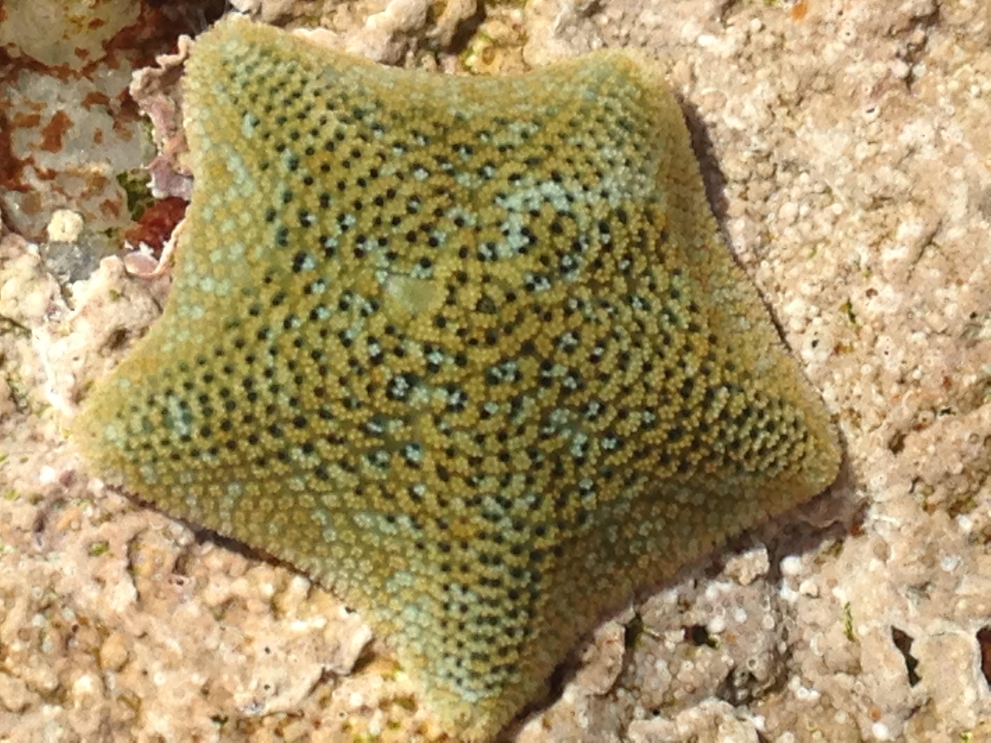 Starfish 1.jpg