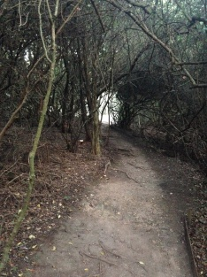 Mystical Walkway